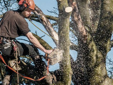 tree limb and branch removal